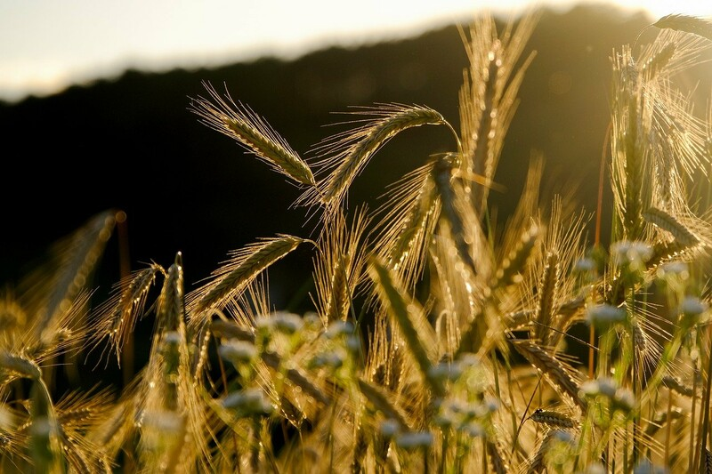 Appel à projet « L'agriculture s'adapte au changement climatique »